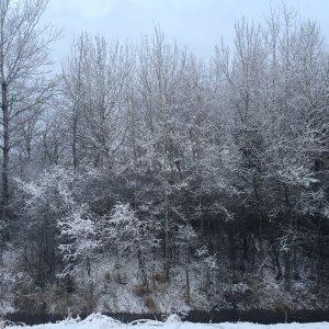 الثلوج